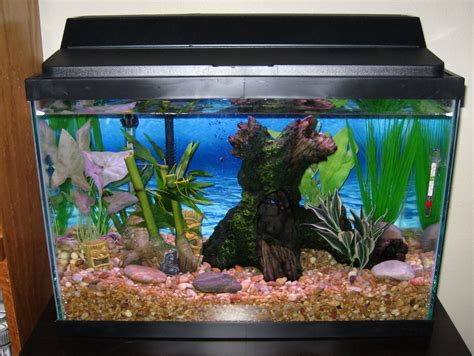 good aquarium decorations http monpts com some fish tank display ideas house design and office fish