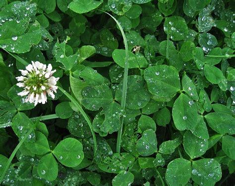 Pilze Im Rasen Anzeichen by Rund Um Den Rasen Rasenpflege Im Garten Pflege Sorten