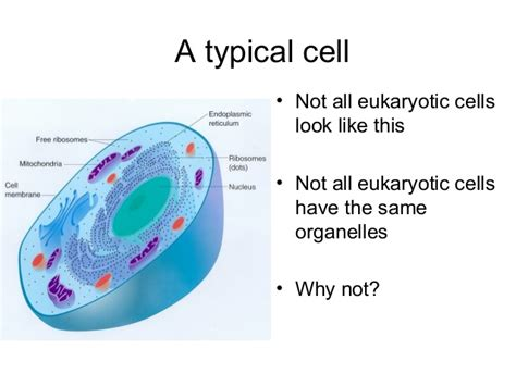 biology 4 specialised cells and tissue pusey science
