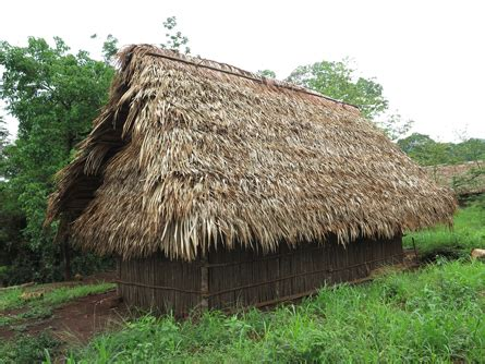 you can see guano palm thatch near tikal but more corozo