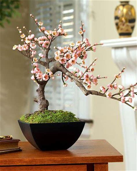a cherry tree bonsai bonsai bonsai trees and cherries on