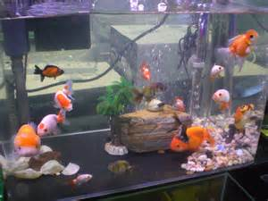 types of aquariums goldfish types for aquariums www proteckmachinery com