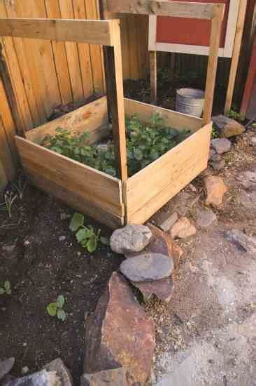 how to build a potato planter diy earth news