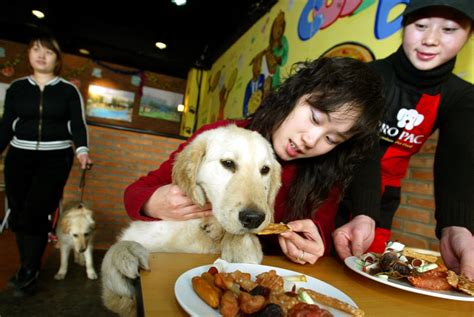 restaurant for dogs world s top 10 luxurious hotels and restaurants for dogs photos