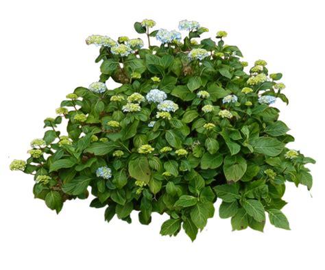 bushes png images free download bush png