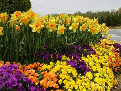 29 Best Front Flower Bed Ideas Images On Pinterest Pansy Garden Ideas