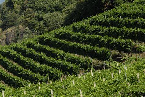 vini pavia cantina terlano vendita vini enoteca pavia