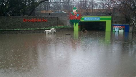 Flooding Closes Brookfield Zoo Nbc Chicago Zoo Lights Chicago Brookfield Zoo