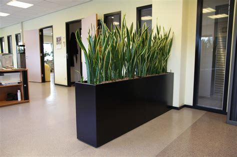 barrier plants create  clear privacy area  plants