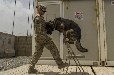 army handler handler s homegrown values environment mirror k 9 career gt u s air forces