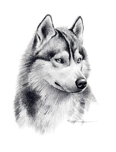 imagenes para dibujar a lapiz de lobos las 25 mejores ideas sobre lobo dibujo a lapiz en