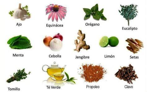 imagenes de flores medicinales plantas medicinales diario el nortino iquique el