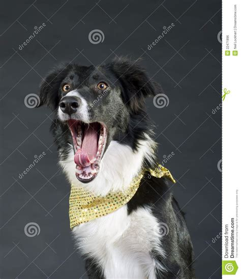 puppy screaming screaming royalty free stock image image 22471896
