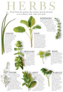 Herb Growing Chart by Identification Of Herbs Wildramp