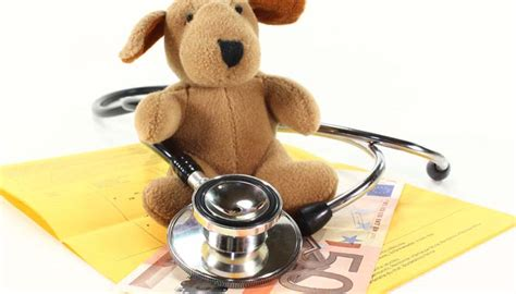 puppy insurance plans 3 providers of best pet insurance for dogs are they worth it