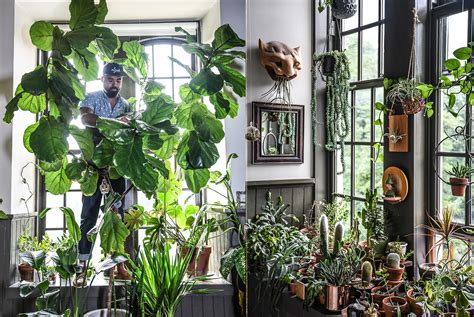 home  plant stylist hilton carter  blog  terrain terrain