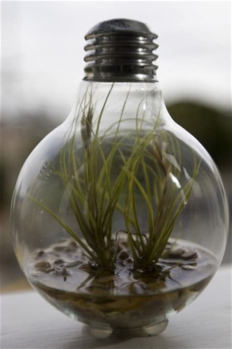 Light Bulb Planter by Ten Planters Created From Light Bulbs