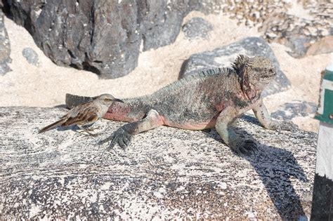 galapagos islands animals file animals in galapagos islands jpg