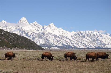 Wyoming Maxy free photo tetons jackson teton mountains wyoming