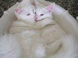 come tenere un gatto in casa come tenere un gatto in casa avr 242 cura di te