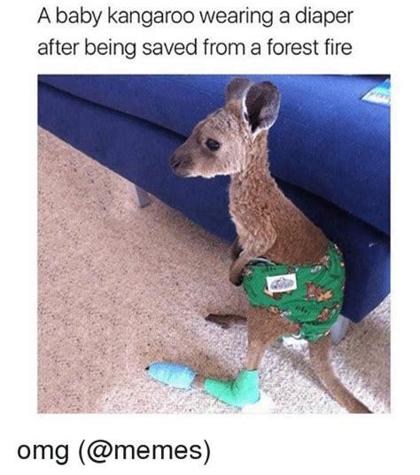 saves from kangaroo 25 best memes about kangaroo kangaroo memes