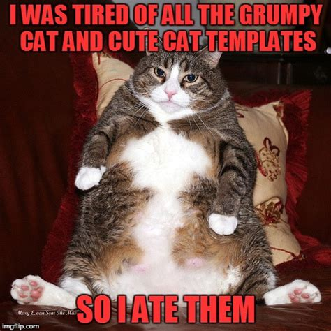 Cute Cat Meme Generator - fat kitty imgflip