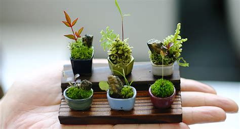 tiny plants ultra small bonsai plants give new meaning to the word