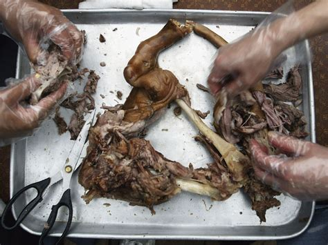 puppy in korean south korea s market bans slaughtering the independent