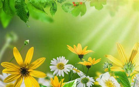 achtergrond bloemen rustig 40 prachtige zomer achtergronden achtergronden