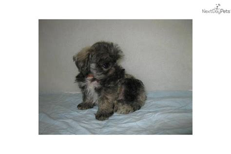 mauzer puppies for sale mixed other puppy for sale near southeast missouri missouri 0a3c843b 1a01