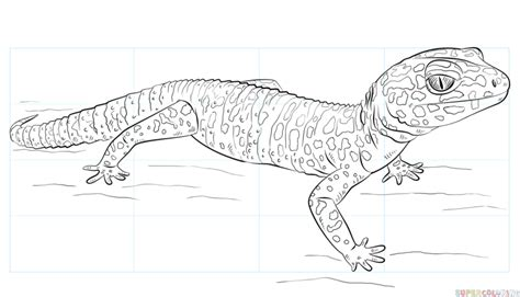 how to draw a leopard gecko step by step drawing tutorials