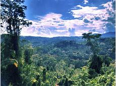Ayahuasca Retreats, Peru – The Garden of Peace Offically ... Rutherford Co