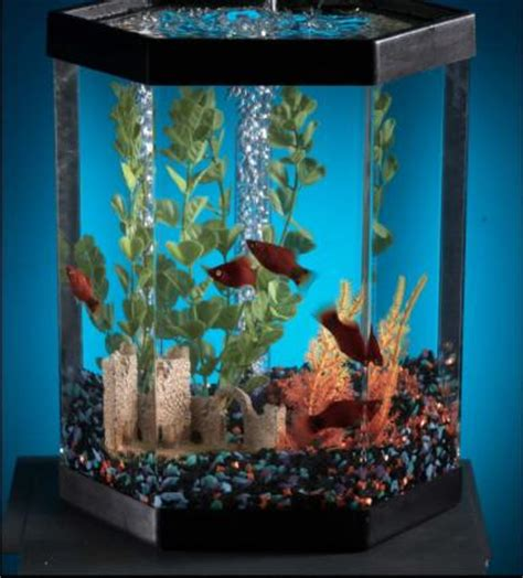 fish tank in bedroom feng shui how to activate feng shui cures