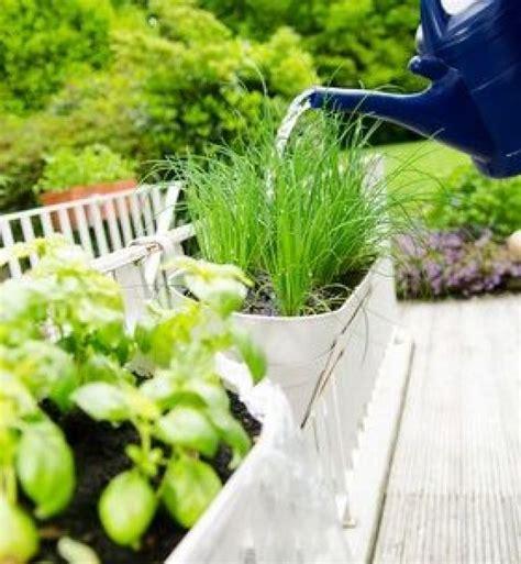 Cultiver Des Plantes Aromatiques by Cultiver Des Plantes Aromatiques Dans Un Jardin