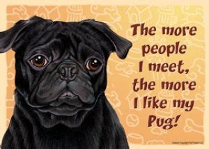 black pug rescue 17 best ideas about pug rescue on pug puppies pug costumes and pug