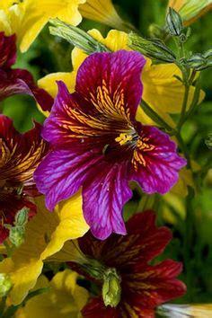 imagenes mas bellas del mundo 1000 images about las flores mas hermosas on pinterest