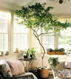 awesome home and then large plants tall houseplants to the 5 best large houseplants houseplant girl