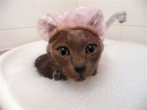cat bathtub 25 cute animals taking baths 25 pics amazing creatures