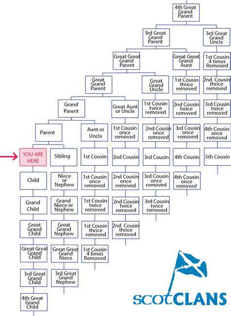Tree Diagram Calculator