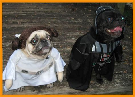 pug darth vader costume darth vader pug and princess leia pug all things pug