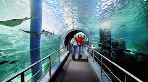 SEA LIFE Melbourne Aquarium & Eureka Skydeck 88 Admission   Melbourne