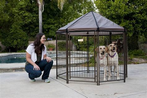 pet gazebo review the advantek pet gazebo animal hub