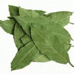 Daun Ketapang Hijau Segar 1 Lembar Utuh mimuk bambang irawan s 22 bumbu daun untuk masakan