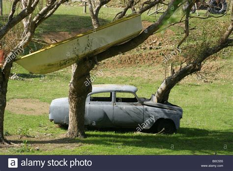 car with tree image car with tree growing out of engine bay and dinghy stuck in tree stock photo 17477857 alamy