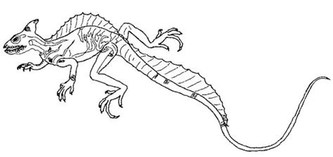 collared lizard coloring page tuatara animal coloring pages 5 pleasurable design ideas