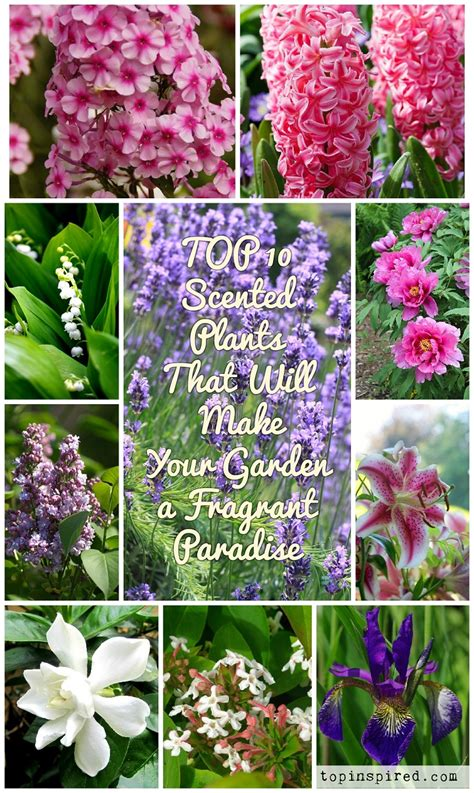 fragrant plants list top 10 scented plants that will make your garden a