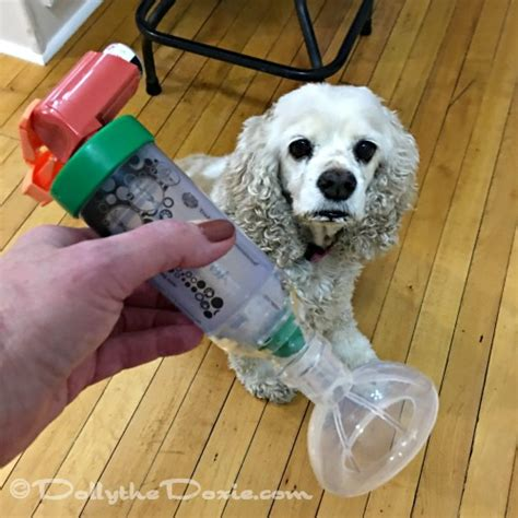 bronchitis in dogs living with chronic bronchitis in dogs