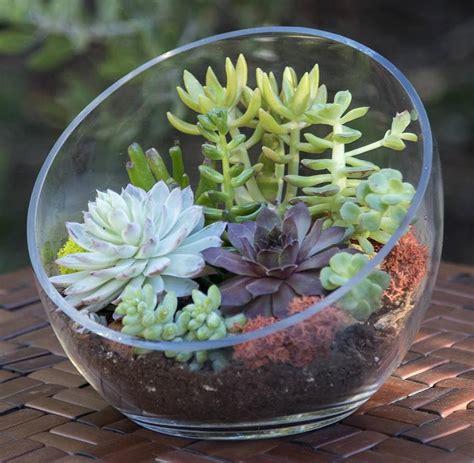 succulent planters for sale shop succulents succulents for sale buy succulents