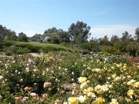 South Coast Botanical Garden by Koi Pond Picture Of South Coast Botanic Garden Palos