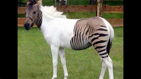 rarest in the world rarest animals in the world copy wmv